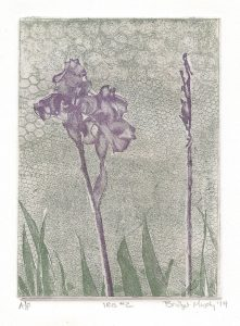 Iris 2 art Bridget Murphy Design Printmaking