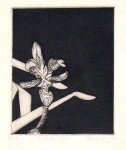 Siberian Iris art Bridget Murphy Design Printmaking